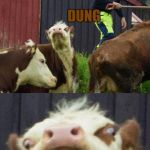 Bad pun cow  | WHAT'S BROWN AND SOUNDS LIKE A BELL? DUNG | image tagged in bad pun cow | made w/ Imgflip meme maker