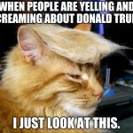 donald trump cat | WHEN PEOPLE ARE YELLING AND SCREAMING ABOUT DONALD TRUMP I JUST LOOK AT THIS. | image tagged in donald trump cat | made w/ Imgflip meme maker