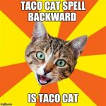Bad Advice Cat Meme | TACO CAT SPELL BACKWARD IS TACO CAT | image tagged in memes,bad advice cat | made w/ Imgflip meme maker