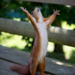 amen squirrel | TONIGHT WE DRUM!!! | image tagged in amen squirrel | made w/ Imgflip meme maker