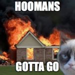 Burn Kitty Meme | HOOMANS GOTTA GO | image tagged in memes,burn kitty,grumpy cat | made w/ Imgflip meme maker
