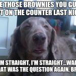 High Dog Meme | ATE THOSE BROWNIES YOU GUYS LEFT ON THE COUNTER LAST NIGHT I'M STRAIGHT, I'M STRAIGHT...WAIT WHAT WAS THE QUESTION AGAIN, BRO? | image tagged in memes,high dog | made w/ Imgflip meme maker