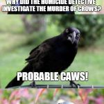 bad pun crow | WHY DID THE HOMICIDE DETECTIVE INVESTIGATE THE MURDER OF CROWS? PROBABLE CAWS! | image tagged in bad pun crow,murder,detective,memes,birds | made w/ Imgflip meme maker