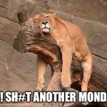 sleeping lion | AH! SH#T ANOTHER MONDAY | image tagged in sleeping lion | made w/ Imgflip meme maker
