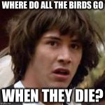 Conspiracy Keanu Meme | WHERE DO ALL THE BIRDS GO WHEN THEY DIE? | image tagged in memes,conspiracy keanu | made w/ Imgflip meme maker