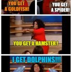 Everybody gets a pet | YOU GET A GOLDFISH! YOU GET A SPIDER! YOU GET A HAMSTER ! I GET DOLPHINS!!! | image tagged in memes,oprah you get a car everybody gets a car,dolphins | made w/ Imgflip meme maker