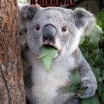 Suprised Koala | WHEN U ENTER A GIVAWAY AND WIN | image tagged in suprised koala | made w/ Imgflip meme maker