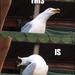 Inhaling Seagull Meme | NO.. THIS IS SPARTA!!!!!!!!!!!!!!!!!!!!!!!!!!!!!!!!!!!!!!!!! | image tagged in memes,inhaling seagull | made w/ Imgflip meme maker