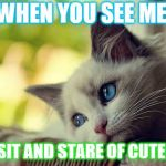 First World Problems Cat Meme | WHEN YOU SEE ME YOU SIT AND STARE OF CUTENESS | image tagged in memes,first world problems cat | made w/ Imgflip meme maker