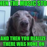 High Dog Meme | WHEN THE MUSIC STOPS AND THEN YOU REALIZE THERE WAS NONE ON | image tagged in memes,high dog,dog week | made w/ Imgflip meme maker