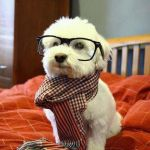 Intelligent Dog Meme | IF I ONLY SEE BLACK AND WHITE WHY AM I WEARING GLASSES | image tagged in memes,intelligent dog | made w/ Imgflip meme maker