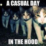 Wrong Neighboorhood Cats Meme | A CASUAL DAY IN THE HOOD | image tagged in memes,wrong neighboorhood cats | made w/ Imgflip meme maker
