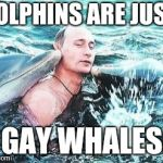 Gay Whales | DOLPHINS ARE JUST GAY WHALES | image tagged in putin dolphins | made w/ Imgflip meme maker