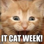 Excited Cat Meme | IT CAT WEEK! | image tagged in memes,excited cat | made w/ Imgflip meme maker