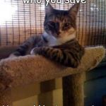 The Most Interesting Cat In The World Meme | Be careful who you save You could be interrupting someone's karma | image tagged in memes,the most interesting cat in the world | made w/ Imgflip meme maker