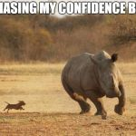 animals | ME CHASING MY CONFIDENCE BE LIKE | image tagged in animals | made w/ Imgflip meme maker