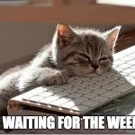 Bored Keyboard Cat | JUST WAITING FOR THE WEEKEND | image tagged in bored keyboard cat | made w/ Imgflip meme maker