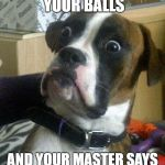 Surprised Dog | WHEN YOU'RE LICKING YOUR BALLS AND YOUR MASTER SAYS I WISH I COULD DO THAT! | image tagged in surprised dog | made w/ Imgflip meme maker