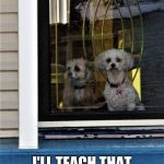 funny dog meme | TODAY IS THE DAY I'LL TEACH THAT CAT A LESSON | image tagged in funny dogs | made w/ Imgflip meme maker