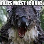 Angry Koala Meme | THE WORLDS MOST ICONIC ANIMAL | image tagged in memes,angry koala | made w/ Imgflip meme maker
