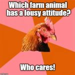 Anti Joke Chicken Meme | Which farm animal has a lousy attitude? Who cares! | image tagged in memes,anti joke chicken | made w/ Imgflip meme maker