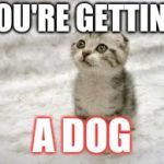 Sad Cat Meme | YOU'RE GETTING A DOG | image tagged in memes,sad cat | made w/ Imgflip meme maker