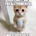 Cute Cat Meme | OBEY ME. I AM THE ALL POWERFUL MR.FLUFFYFACE! | image tagged in memes,cute cat | made w/ Imgflip meme maker