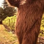 sasquatch with wine | WHERE DOES WINE COME FROM? THE PLANET OF THE GRAPES! | image tagged in sasquatch with wine | made w/ Imgflip meme maker