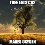 Tree of Life | TREE EATS CO2 MAKES OXYGEN | image tagged in tree of life | made w/ Imgflip meme maker
