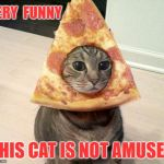 Not amused | VERY  FUNNY THIS CAT IS NOT AMUSED | image tagged in pizza cat | made w/ Imgflip meme maker