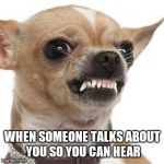 Angry chihuahua  | WHEN SOMEONE TALKS ABOUT YOU SO YOU CAN HEAR | image tagged in angry chihuahua | made w/ Imgflip meme maker