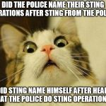 Scared Cat Meme | DID THE POLICE NAME THEIR STING OPERATIONS AFTER STING FROM THE POLICE? OR DID STING NAME HIMSELF AFTER HEARING THAT THE POLICE DO STING OPE | image tagged in memes,scared cat | made w/ Imgflip meme maker