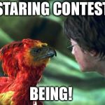 Phoenix Harry potter | STARING CONTEST BEING! | image tagged in phoenix harry potter | made w/ Imgflip meme maker