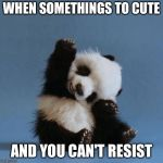 Panda | WHEN SOMETHINGS TO CUTE AND YOU CAN'T RESIST | image tagged in panda | made w/ Imgflip meme maker