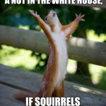 amen squirrel | HOW DID WE END UP WITH A NUT IN THE WHITE HOUSE, IF SQUIRRELS CAN'T VOTE? | image tagged in amen squirrel,memes | made w/ Imgflip meme maker