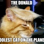 donald trump cat | THE DONALD COOLEST CAT ON THE PLANET! | image tagged in donald trump cat | made w/ Imgflip meme maker