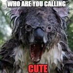 Hateful koala | WHO ARE YOU CALLING CUTE | image tagged in memes,angry koala,funny | made w/ Imgflip meme maker