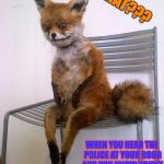 Stoned Fox | WHAT??? WHEN YOU HEAR THE POLICE AT YOUR DOOR AND YOU KNOW YOU'VE DONE SOMETHING BAD | image tagged in stoned fox | made w/ Imgflip meme maker