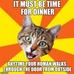 Pavlov's Cat | IT MUST BE TIME FOR DINNER ANYTIME YOUR HUMAN WALKS THROUGH THE DOOR FROM OUTSIDE | image tagged in memes,bad advice cat | made w/ Imgflip meme maker