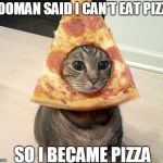 yOU OUTSMARTED ME NOOO- | HOOMAN SAID I CAN'T EAT PIZZA SO I BECAME PIZZA | image tagged in pizza cat | made w/ Imgflip meme maker