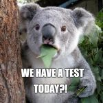 Suprised Koala | WE HAVE A TEST TODAY?! | image tagged in suprised koala | made w/ Imgflip meme maker