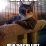 The Cat That Got the Canary (^◡^ ) | I WENT TO THE CANARY ISLANDS NOW THEY'RE JUST CALLED THE ISLANDS | image tagged in memes,the most interesting cat in the world,caturday,cat,cats,travel | made w/ Imgflip meme maker