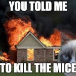 Burn Kitty Meme | YOU TOLD ME TO KILL THE MICE | image tagged in memes,burn kitty,grumpy cat | made w/ Imgflip meme maker