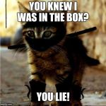 Ninja Cat | YOU KNEW I WAS IN THE BOX? YOU LIE! | image tagged in ninja cat | made w/ Imgflip meme maker