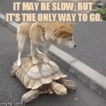 Catching A Ride | IT MAY BE SLOW, BUT IT'S THE ONLY WAY TO GO. | image tagged in gifs,memes,dog,riding,turtle,slow motion | made w/ Imgflip video-to-gif maker