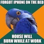 Paranoid Parrot Meme | FORGOT IPHONE ON THE BED HOUSE WILL BURN WHILE AT WORK | image tagged in memes,paranoid parrot | made w/ Imgflip meme maker