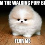 Derp Doge | I AM THE WALKING PUFF BALL FEAR ME | image tagged in derp doge | made w/ Imgflip meme maker