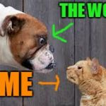 The uphill, never ending  battle! | THE WORLD! ME | image tagged in dog cat staredown,watch the world burn,the daily struggle,crazy cat | made w/ Imgflip meme maker
