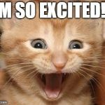 Excited Cat Meme | I'M SO EXCITED!!! | image tagged in memes,excited cat | made w/ Imgflip meme maker