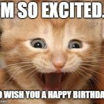 Excited Cat Meme | I'M SO EXCITED... TO WISH YOU A HAPPY BIRTHDAY! | image tagged in memes,excited cat | made w/ Imgflip meme maker